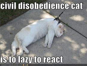 civil disobedience cat  is to lazy to react