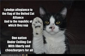 I pledge allegiance to the flag of the United Cat Alliance And to the republic of which they nap