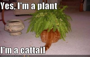 Yes, I'm a plant  I'm a cattail