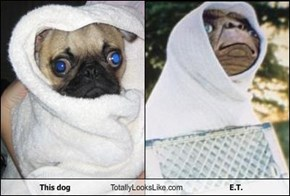 This Dog Totally Looks Like E.T.