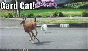 Gard Cat!