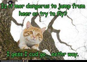Iz it mor dangerus to jump frum heer or try to fly?