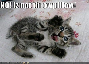 NO! Iz not throwpillow!