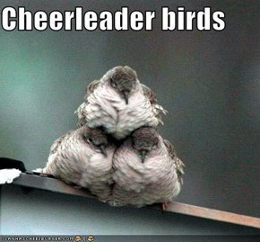 Cheerleader birds
