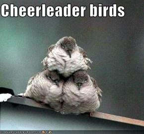 Cheerleader birds