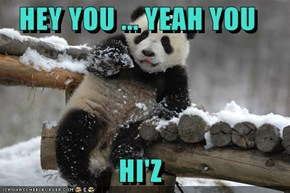HEY YOU ... YEAH YOU  HI'Z