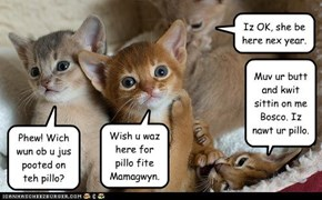 Majik Kittehs miss Mamagwyn for Pillo Fite.