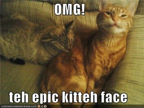 OMG!  teh epic kitteh face