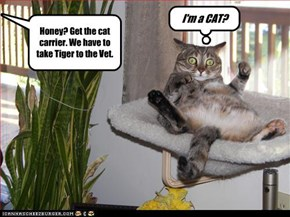 I'm a CAT?