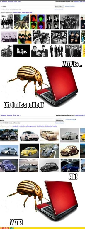 Silly Beetle!