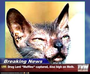 "Breaking News - Drug Lord ""Muffins"" captured, Also high on Meth."