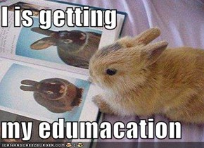 I is getting  my edumacation