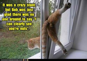 "It  was  a  crazy  stunt,  but  Bob  was  just  glad  there  was  no  one  around  to  say  ""I  can  clearly  see  you're  nuts""."