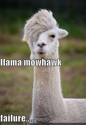 llama mowhawk failure......