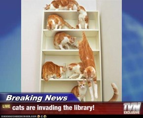 Breaking News - cats are invading the library!