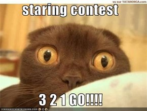 staring contest  3 2 1 GO!!!!