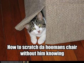 How to scratch da hoomans chair without him knowing