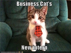 Business Cat's  New intern