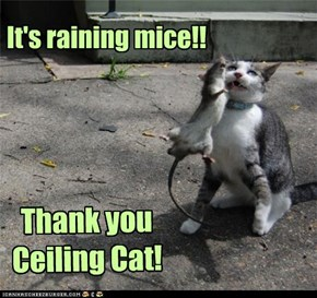 It's raining mice!!  Thank you Ceiling Cat!