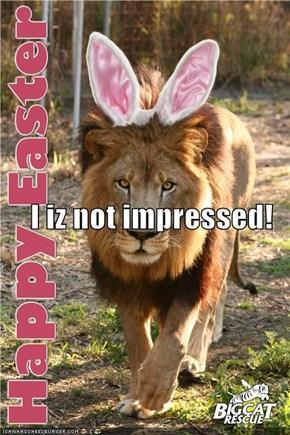 I iz not impressed!