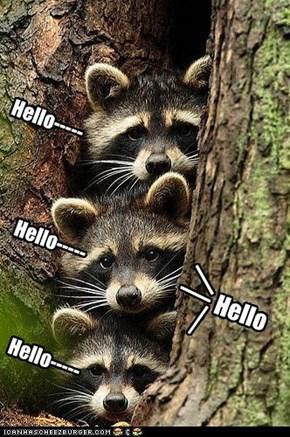 Hello-----