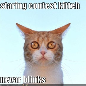 staring contest kitteh  nevar blinks