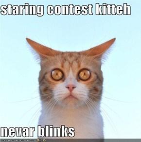 staring contest kitteh  nevar blinks