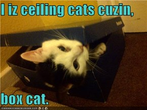 I iz ceiling cats cuzin,  box cat.