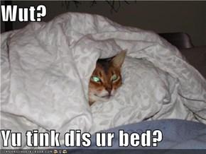 Wut?  Yu tink dis ur bed?