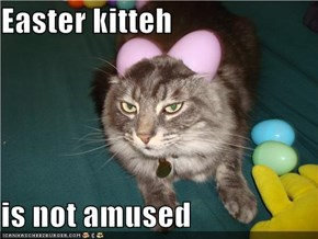 Easter kitteh  is not amused