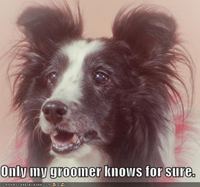 Only my groomer knows for sure.