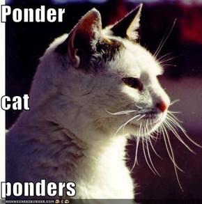 Ponder cat ponders