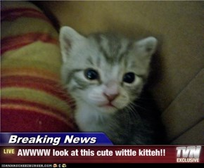 Breaking News - AWWWW look at this cute wittle kitteh!!