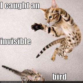 I caught an invisible                                 bird