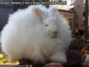 Static bunny's new hair-do is shocking!