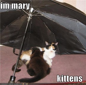 im mary  kittens