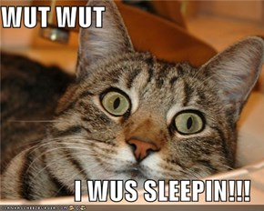 WUT WUT   I WUS SLEEPIN!!!