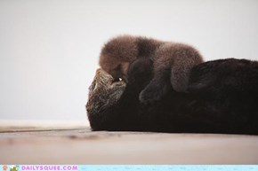 OH MY SQUEE FUZZY LUMPY OTTER BABY