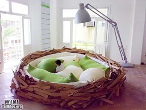 Nest Bed WIN
