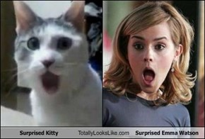 Surprised Kitty Totally Looks Like Surprised Emma Watson