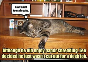 Although he did enjoy paper shredding, Leo decided he just wasn't cut out for a desk job.
