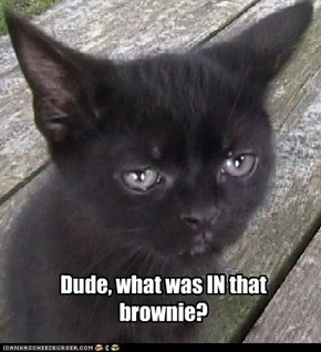 Dude, what was IN that brownie?