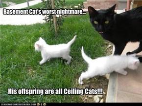 Basement Cat's Worst Nightmare.