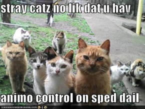stray catz no lik dat u hav  animo control on sped dail