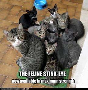THE FELINE STINK-EYE