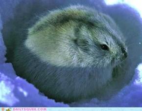 A Cute Butterball