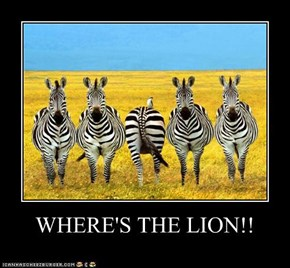 WHERE'S THE LION!!