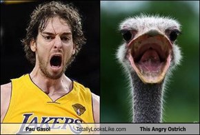 Pau Gasol Totally Looks Like This Angry Ostrich