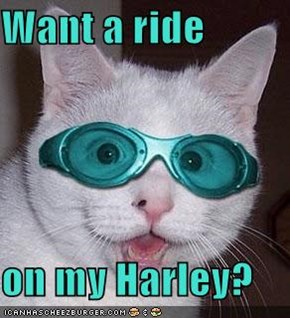 Want a ride   on my Harley?