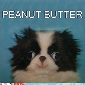 Peanut Bhurrrdhurrr